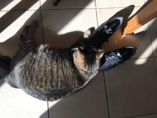 サクラと靴