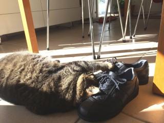 サクラと靴2