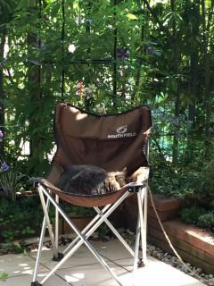 サクラと椅子