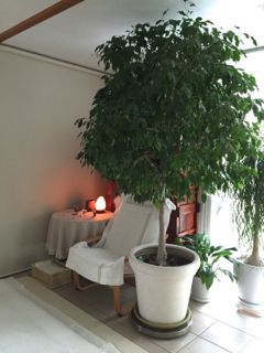 サロンの木